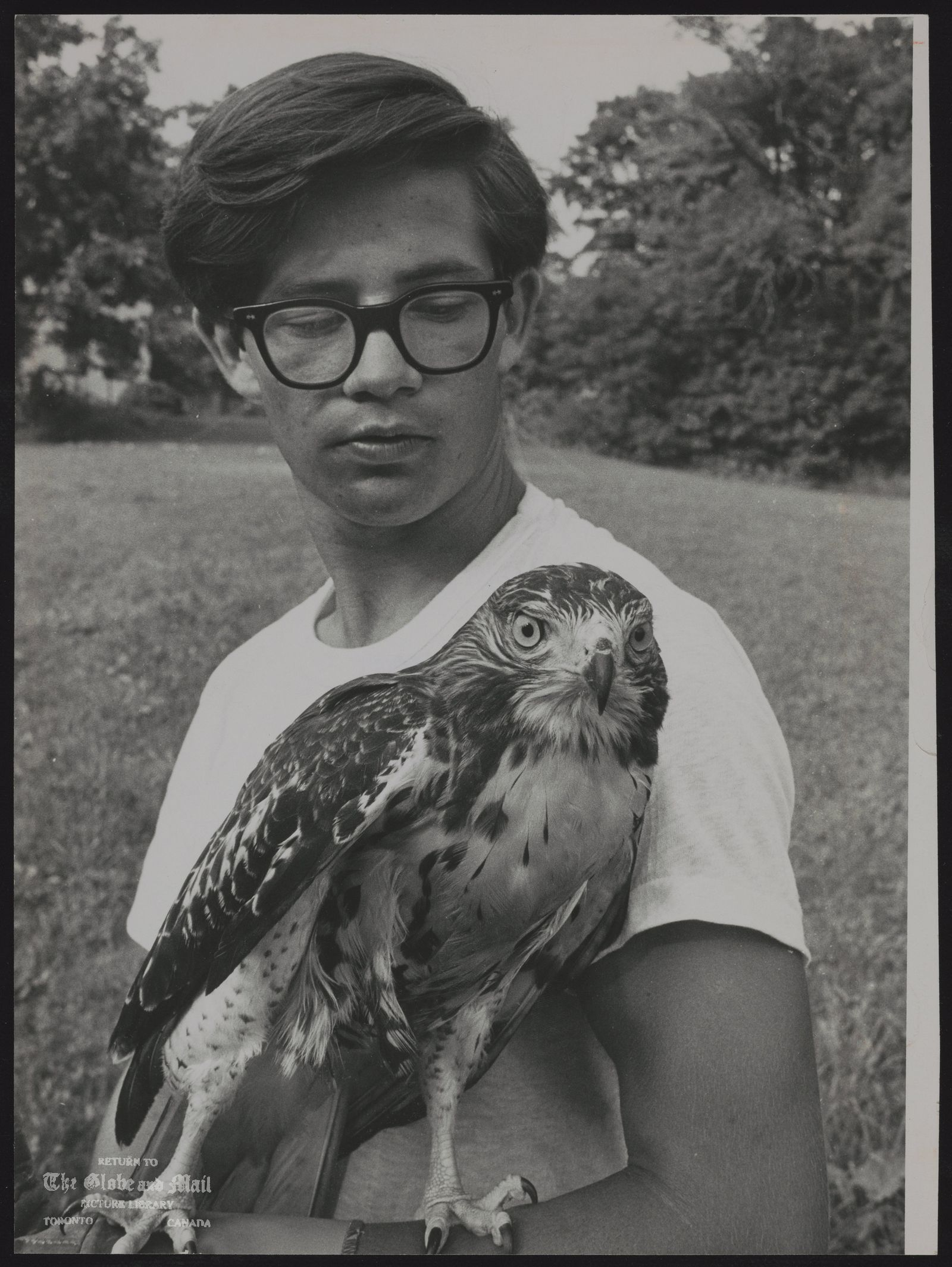 HAWK Leslie Ryckman and Kree; a race against the birds instinct to migrate,