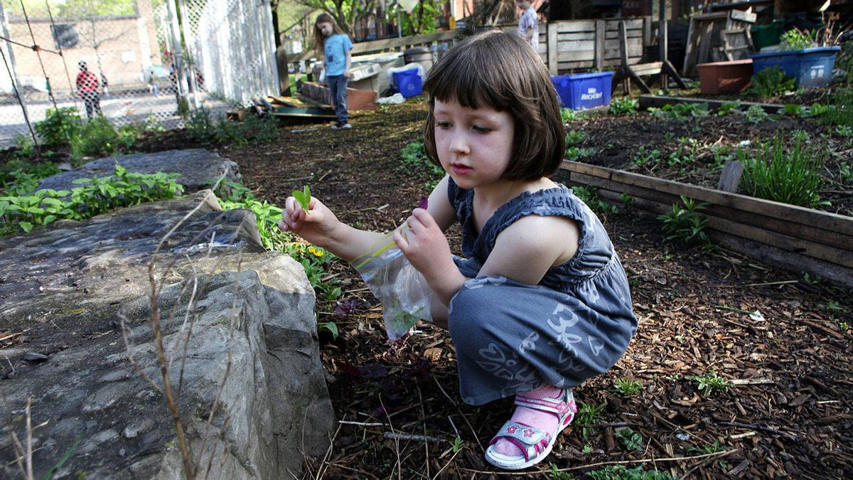 Winchester Public School kindergartener Emma Syme, 5, searches through the school's garden in search of items that help a garden grow.