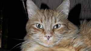 Orangie: Christy Ann Conlin's cat