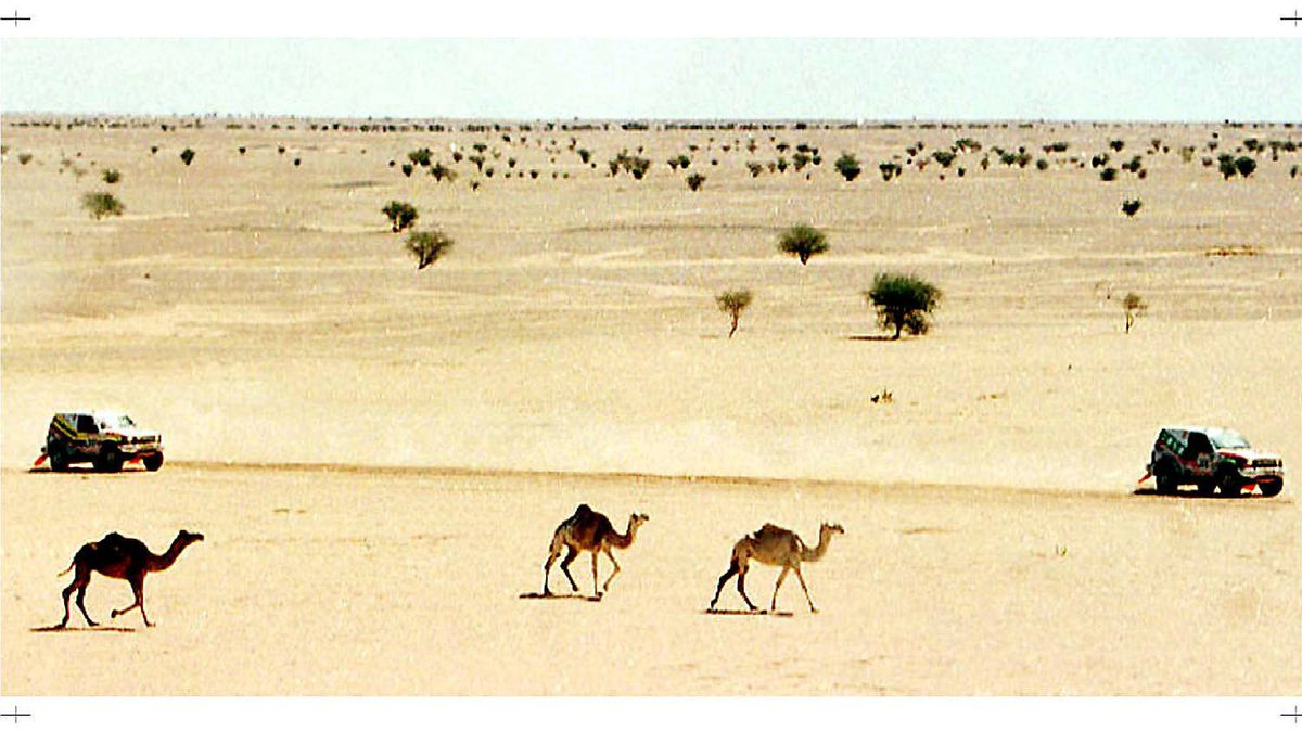 Two competitors of the 19th Dakar rally drive past camels during the ninth stage of the rally between Agades and Oclan, Niger, Monday Jan. 13, 1997.