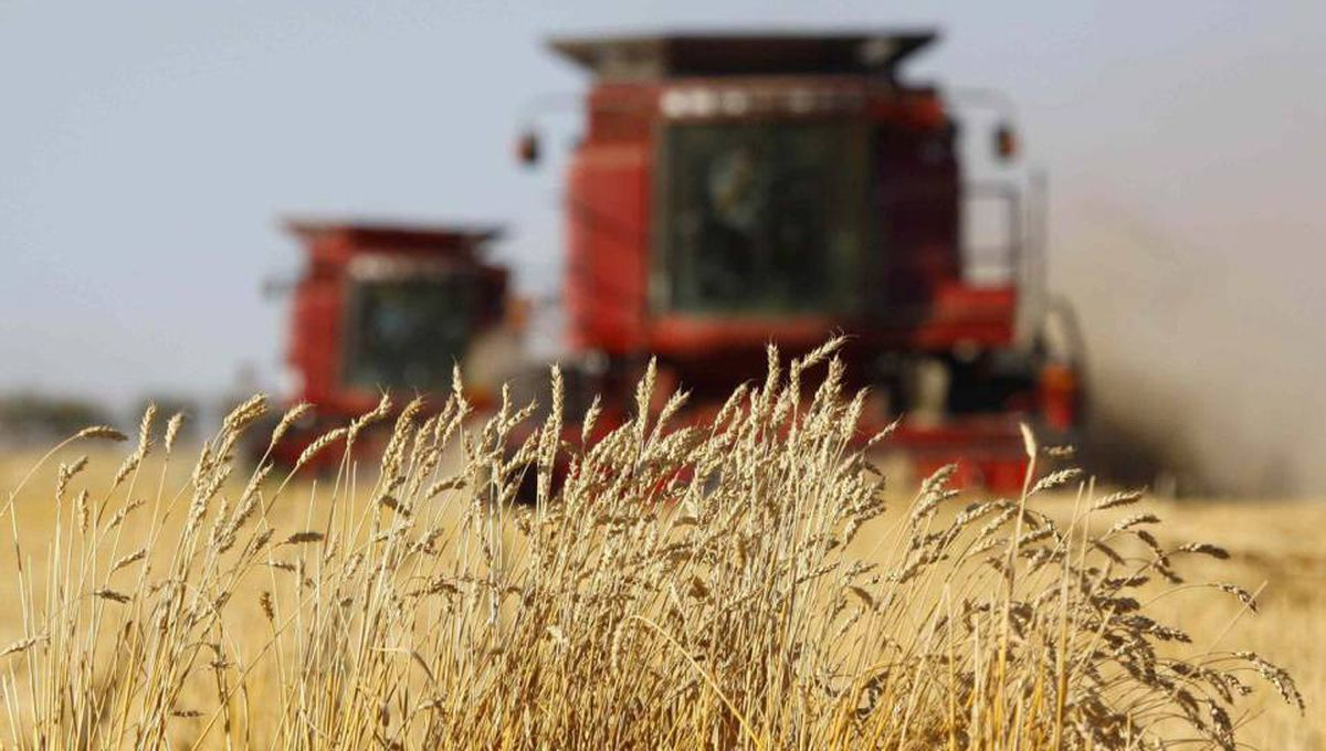 The last stands of wheat remain before being harvested by the Sawyer family near Acme, Alta., in September, 2009.