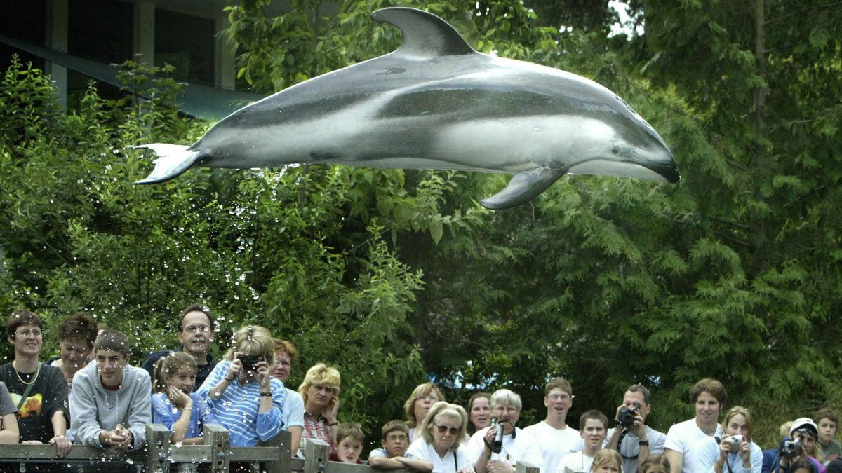 Spinnaker flying high above the crowd at the Vancouver Aquarium in Vancouver July 16, 2003.