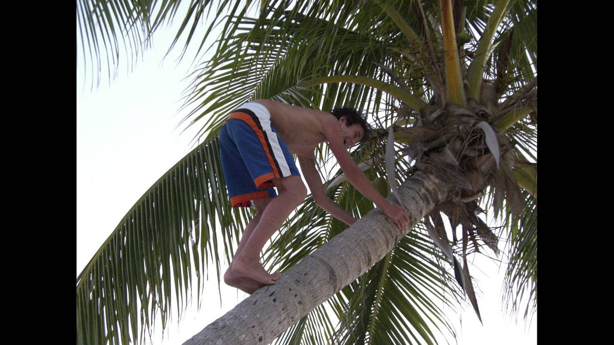 "Christine McCardell photo: My nephew -- ""Climbing for Coconuts"" (March 2009) Grand Cayman Island"
