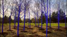 The Vancouver Biennale Blue Trees Site in Richmond, B.C.