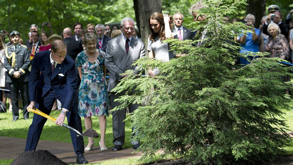 The Duke and Duchess of Cambridge take aprt in a ceremonial tree plating with Governor General David Johnston and his wife Sharon at Rideau Hall in Ottawa on Saturday, July 2, 2011.