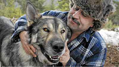 Kelowna area wolf-dog hybrid breeder Keyhan Modaressi cuddles with Simba, his 4 year old Arctic Tundra Wolf hybrid on Tuesday February 15, 2011. Simba is approximately 2 per cent dog, and 98 per cent wolf, says Modaressi.