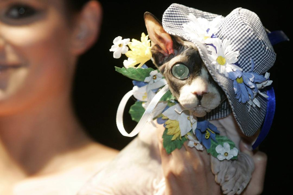 A cat wears designer attire during Pets Fashion Week Russia in Moscow. Alexander Natruskin/Reuters