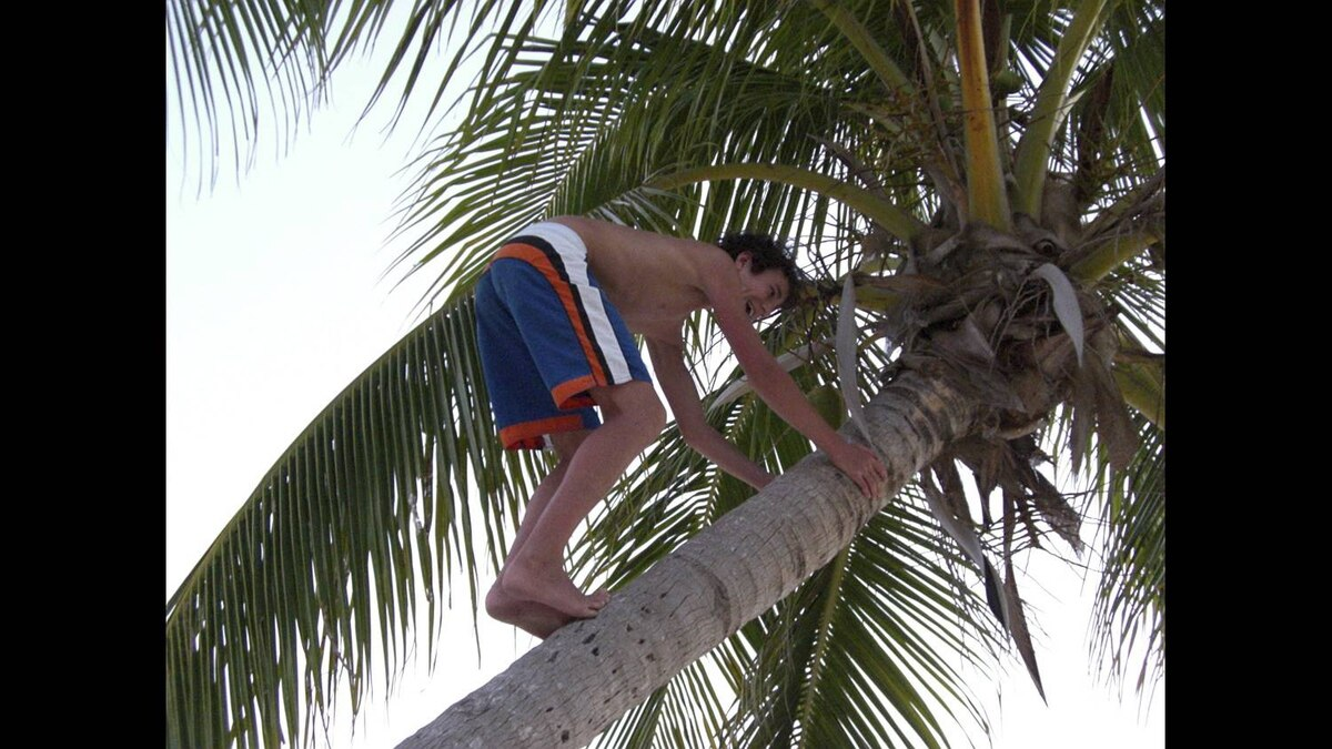"""Christine McCardell photo: My nephew -- """"Climbing for Coconuts"""" (March 2009) Grand Cayman Island"""
