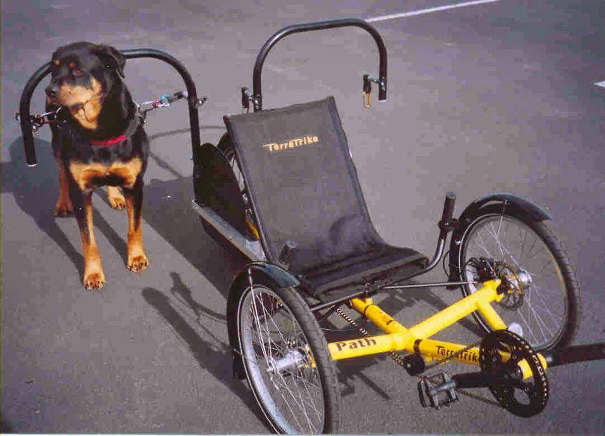 www.dogpoweredscooter.com
