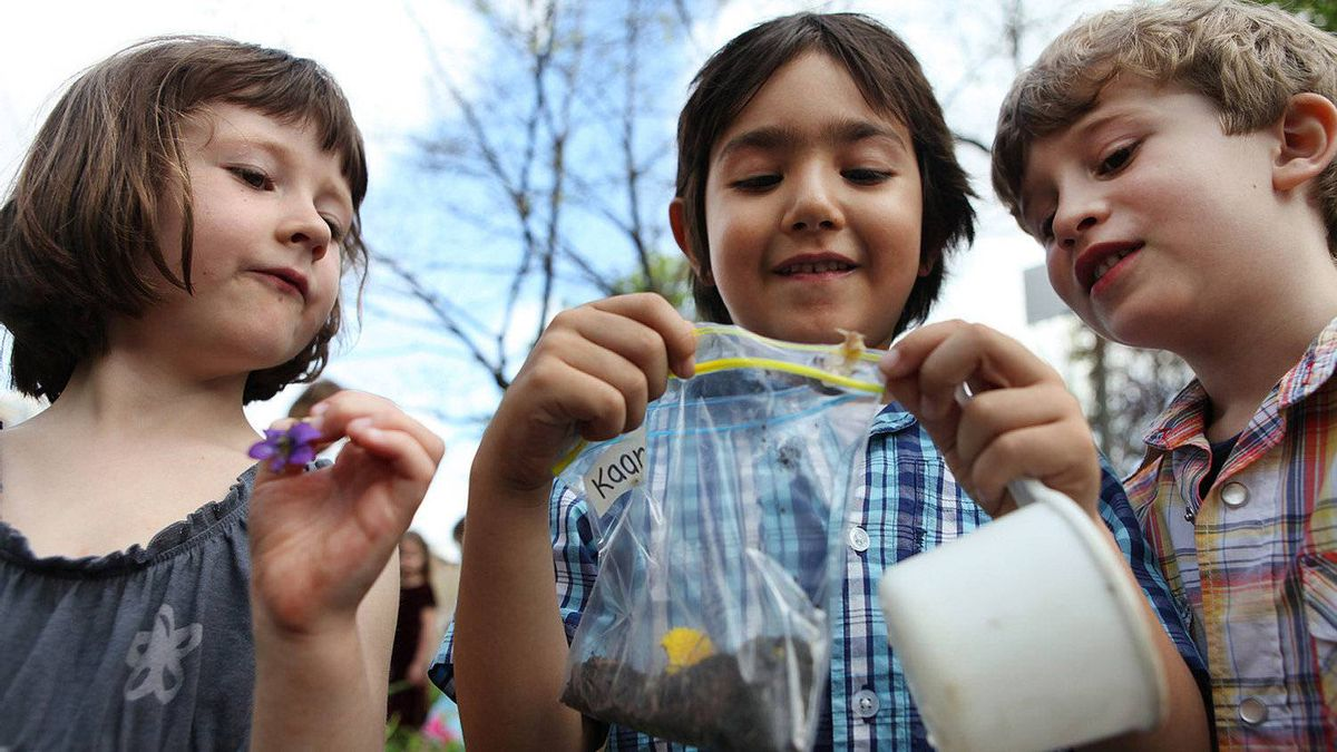 Winchester Public School kindergarteners Emma Syme, 5, Kaan Ronan Kaplangul, 6, and Jackson Cook, 5, look at items they've collected in the garden.