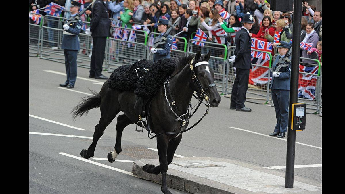 A horse, without a rider, gallops along the Processional Route during the royal wedding of Britain's Prince William and Kate Middleton, on April 29, 2011, in central London.