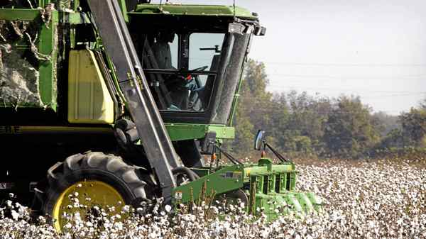 A cotton picker harvests the field on BTC farm October 19, 2003 near Clarksdale Mississippi. BTC raises 1000 acres of cotton, 80% of which is genetically modified (GM) Bt, Roundup Ready cotton.