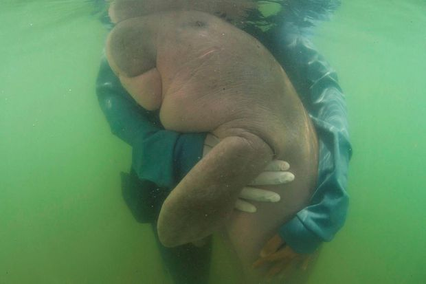 Plastic kills Thailand's beloved baby dugong