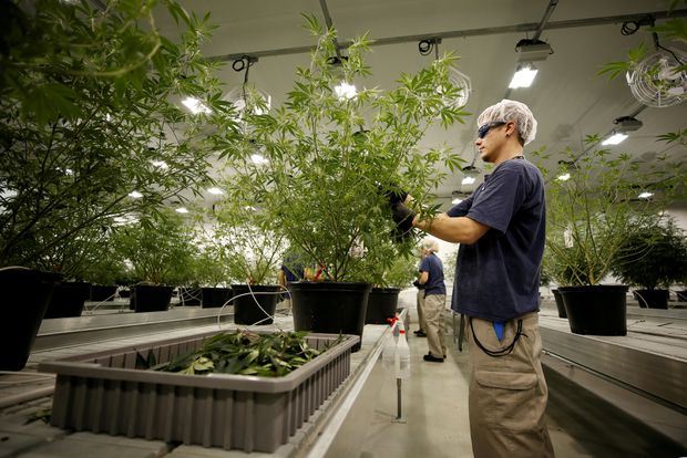 Canopy Growth Applies For First Nyse Listing By A Marijuana Producer