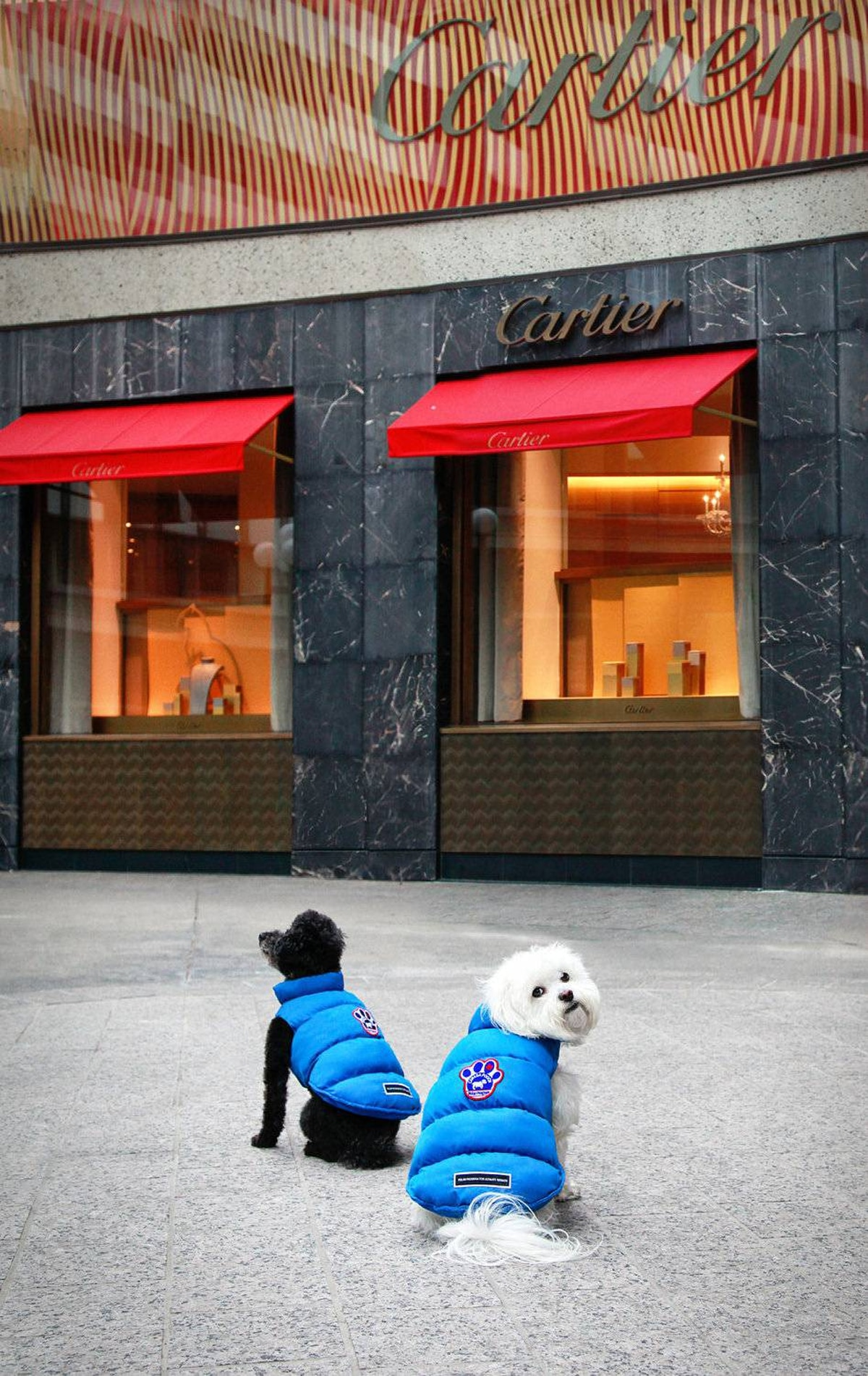 Kirby and Kelev window shopping at Cartier in their blue Arctic Adventurer Vests.