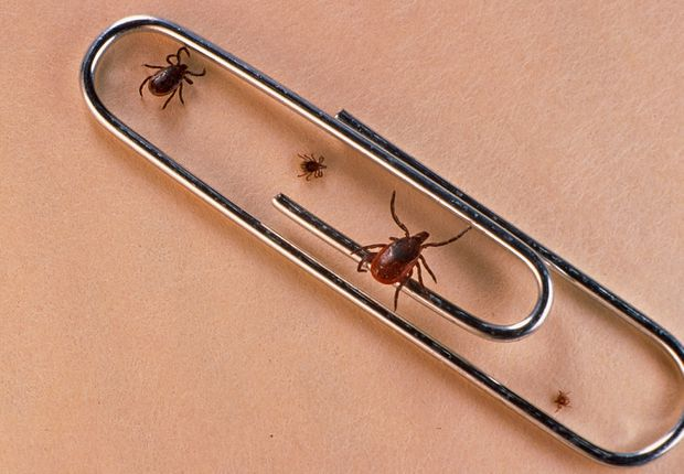 Lyme disease has arrived  Why hasn't a reliable treatment