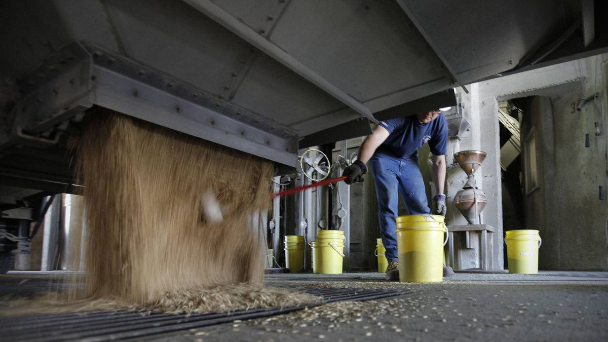 Richard Martens, an elevator assistant, catches a sample of oats at the Paterson GlobalFoods Incorporated grain elevator in Winnipeg.
