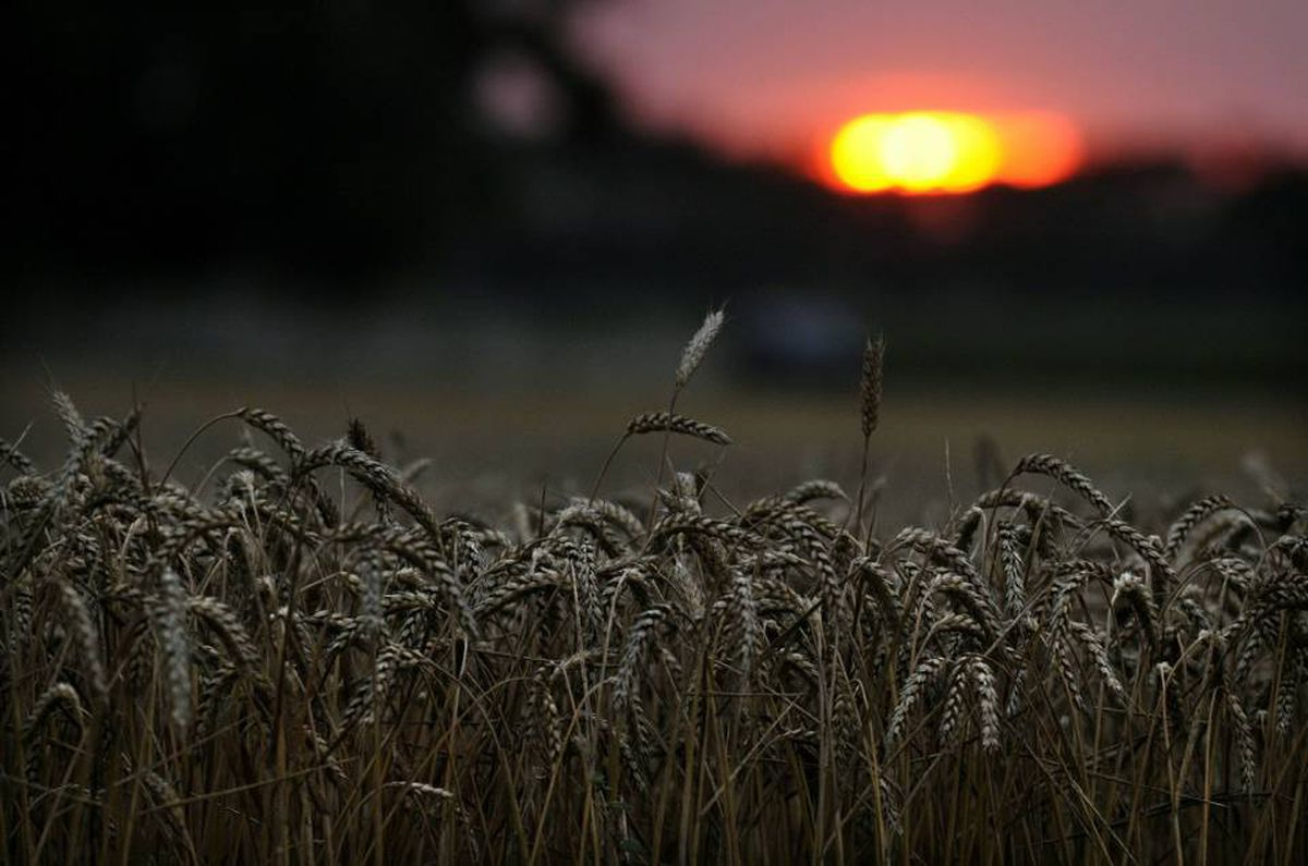 Wheat prices are up by about a third in the past six weeks, thanks mainly to prospects for a poor crop from Russia, other parts of Europe, and Western Canada.