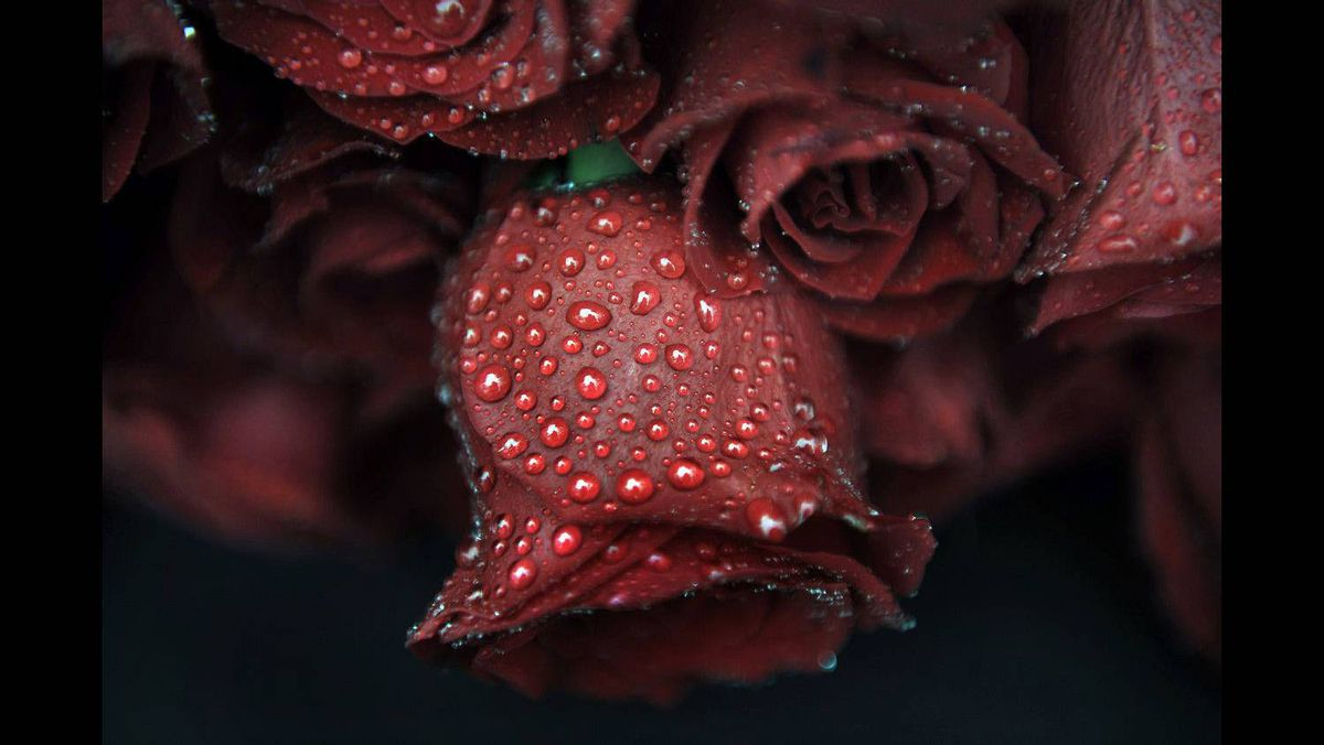 Raindrops are seen on roses during a memorial ceremony for Basque Socialist Party (PSE) politician Fernando Buesa Blanco on the eleventh anniversary of his assassination in Vitoria February 22, 2011.