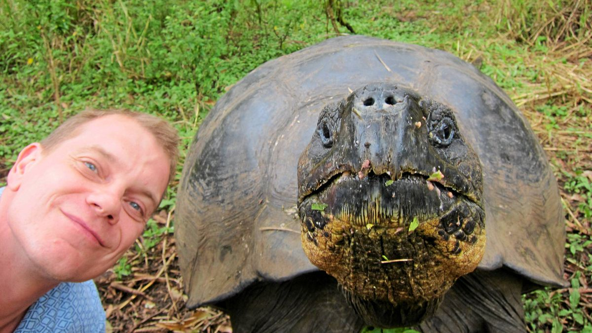 Testing the docility of a giant tortoise in the Galapagos Islands.