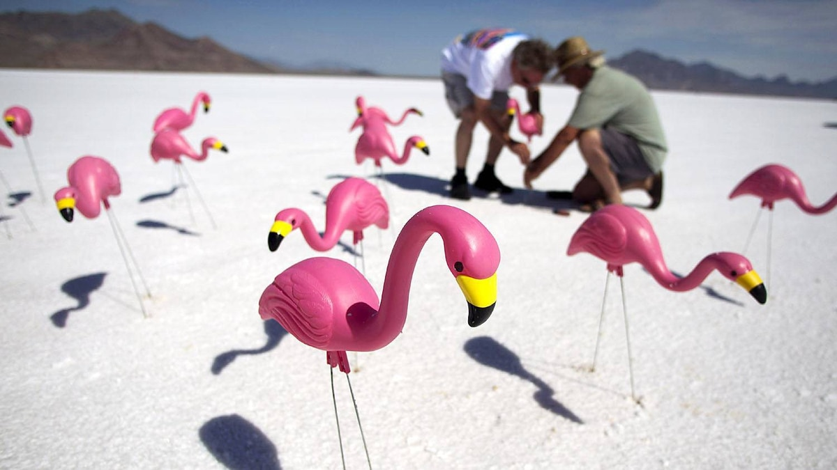 Race fans Chuck Cummings (L) and Bill Flint place plastic pink flamingos in the salt near their viewing area.