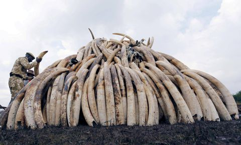 Nations reject controversial bids to legalize sale of ivory, rhino horn