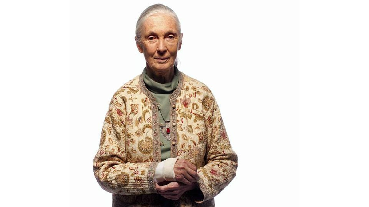 Jane Goodall is photographed March 31, 2011 in Toronto. The cast is for a broken wrist from a recent fall.