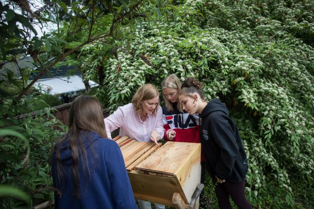 Hive mind learning: School programs get students involved in bee conservation