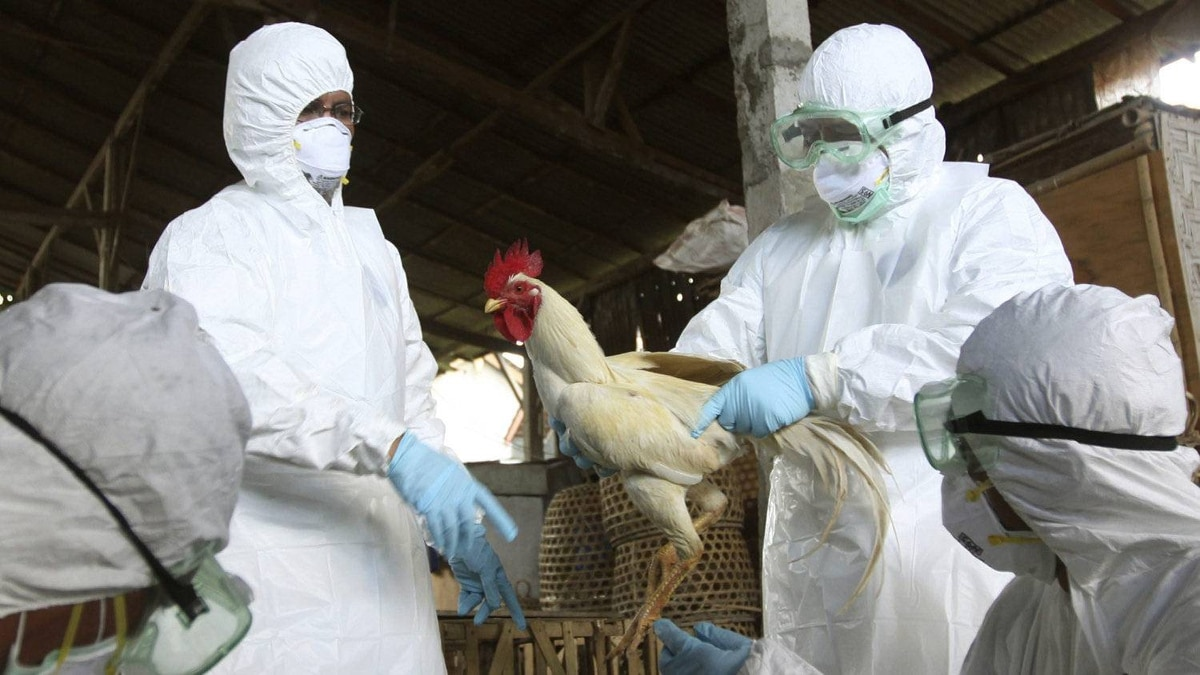 Balinese government officials prepare to cull chickens as a precautionary measure to prevent the spread of bird flu, at a market in Denpasar, Bali, Indonesia, on April 26, 2012.
