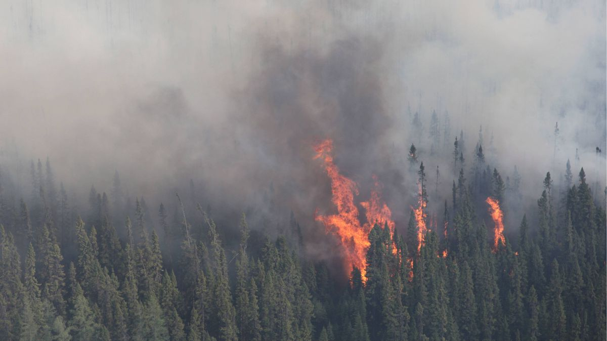 A forest fire burns near Timmins, Ont. on Thursday, May 24, 2012.