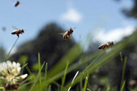 Bee-harming pesticides are turning up in honey globally