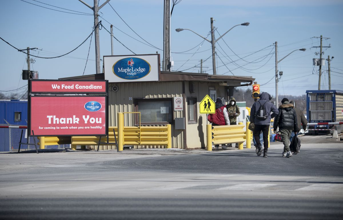 Workers head to the main security gate at Maple Lodge Farms's poultry-processing plant in Brampton, Ont.