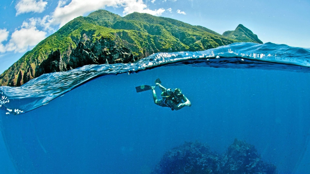 Below the surface of the clean Caribbean Sea, Saba drops away precipitously, making for sublime diving.