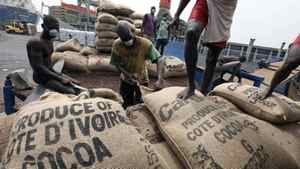 Cocoa ready for export from Ivory Coast. Prices for the commodity have dropped on a bumper crop and reduced demand from European chocolate makers.