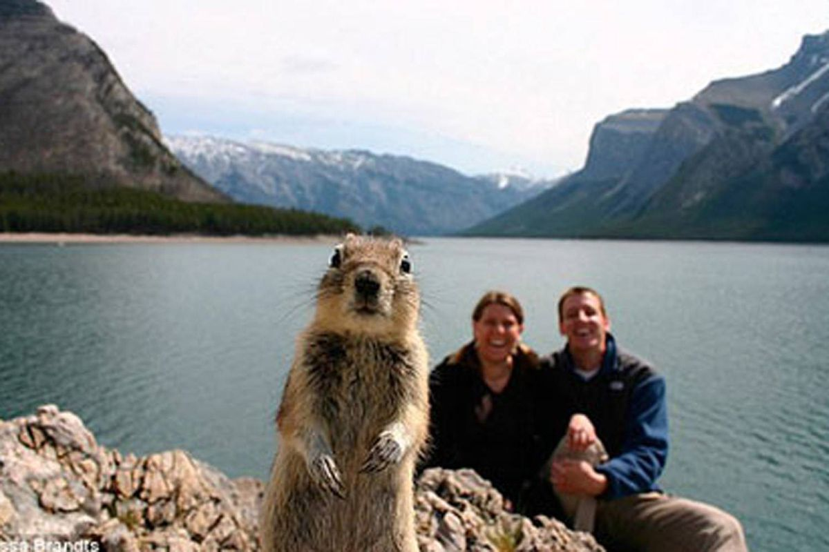 This photo, snapped by Melissa Brandts in Banff National Park, has taken the Internet by storm. (Photo: Melissa Brandts/National Geographic Stock)