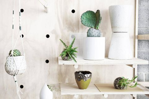 Bring life into your living room by decorating with plants