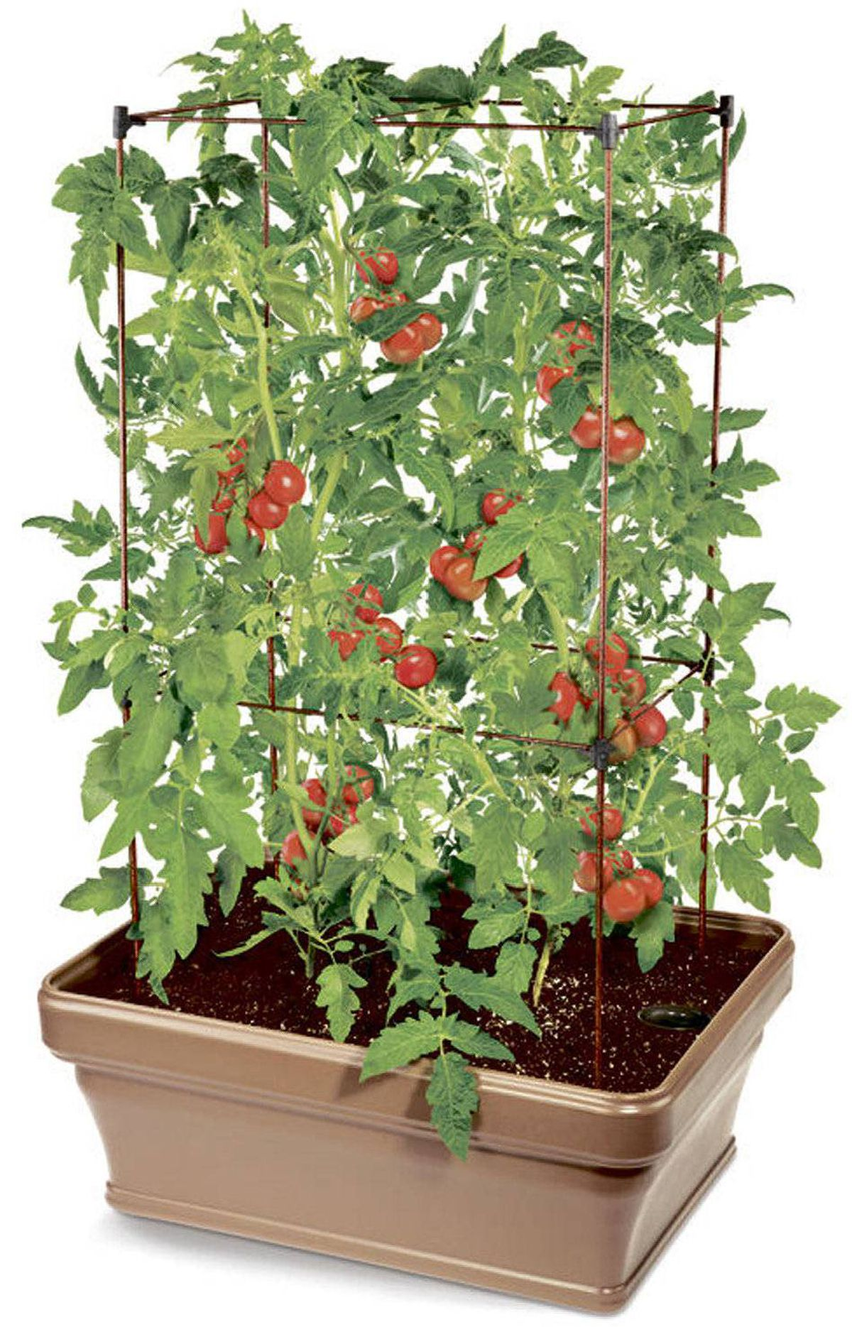 THE FOODIE PC Tomato Planter Kit, $49.99 at Loblaw garden centres across Canada (visit www.loblaw.ca for locations).