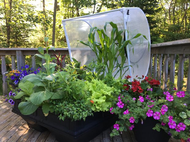 For those with balcony or container gardens, summer's end doesn't have to mean the end of growing season