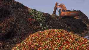 A digger mixes discarded vegetables with compost in a pile of vegetable residue at the Albahida vegetable recycling plant in Nijar, in the southern Spanish region of Almeria, June 8, 2011.