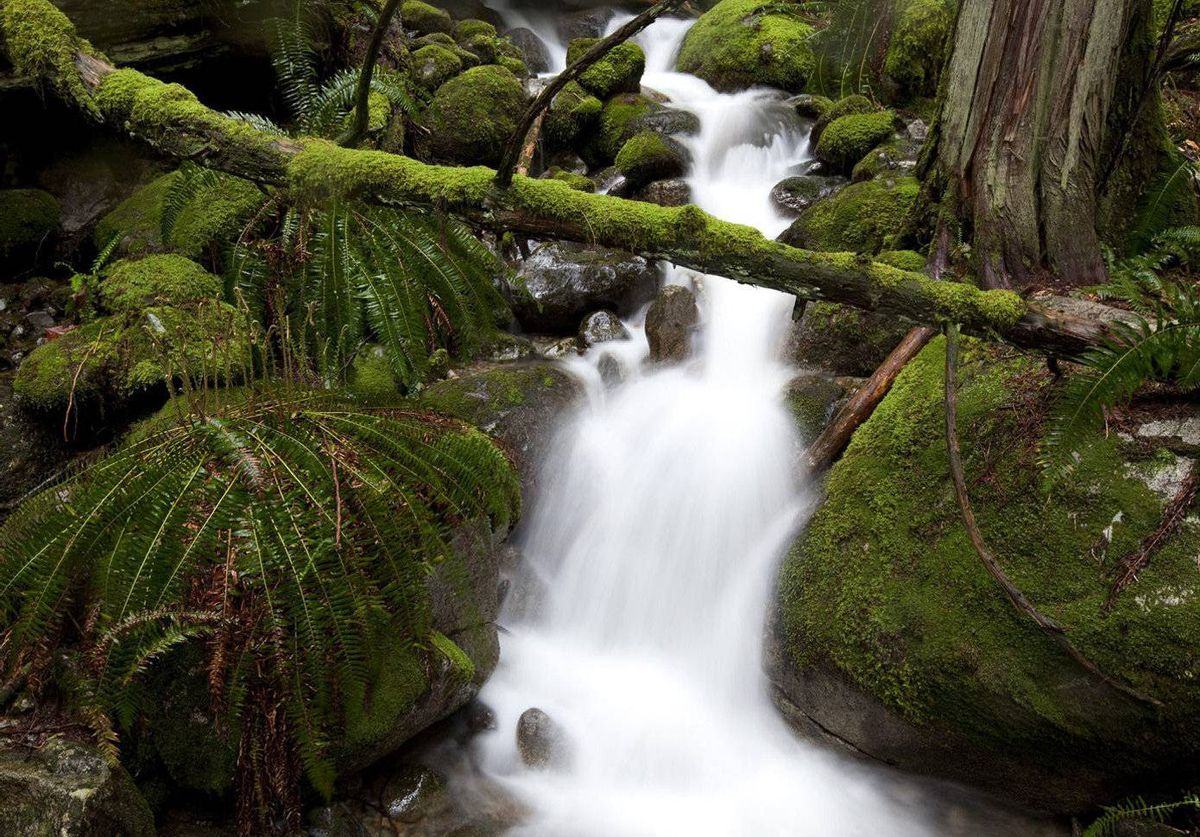 A slow shutter speed blurs the spring runoff as it rushes among moss-covered rocks and trees on Mount Seymour as rain melts the snow in higher elevations in Deep Cove, B.C.