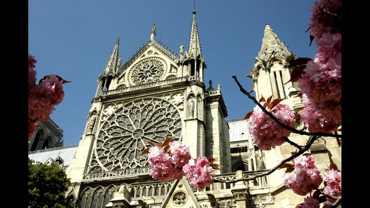 Jean McKenzie Leiper photo: Notre Dame Cathedral, Paris - This photo was taken at the peak of the blossom season in April 2010.