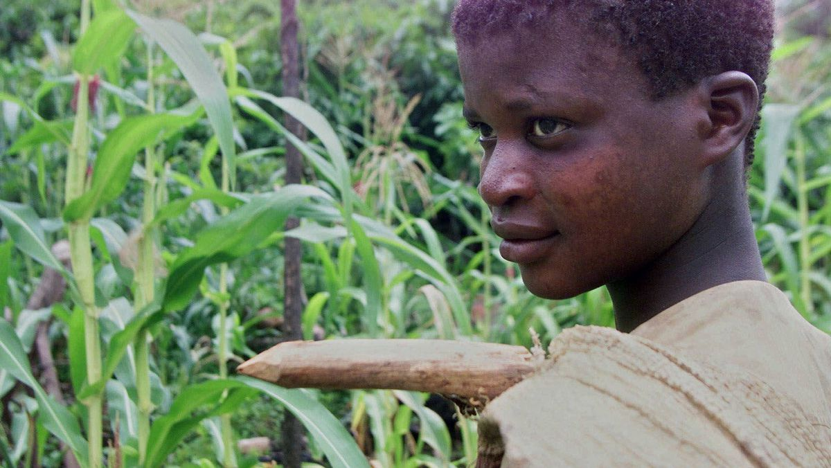 Amadou Kourago, 14, heads out to the field where he works in Noe, Ivory Coast, April 20, 2001. Up to 15,000 children from some of the world's poorest countries are thought to be laboring on plantations across Ivory Coast, producer of 40 percent of the world's cocoa and Africa's largest coffee exporter.