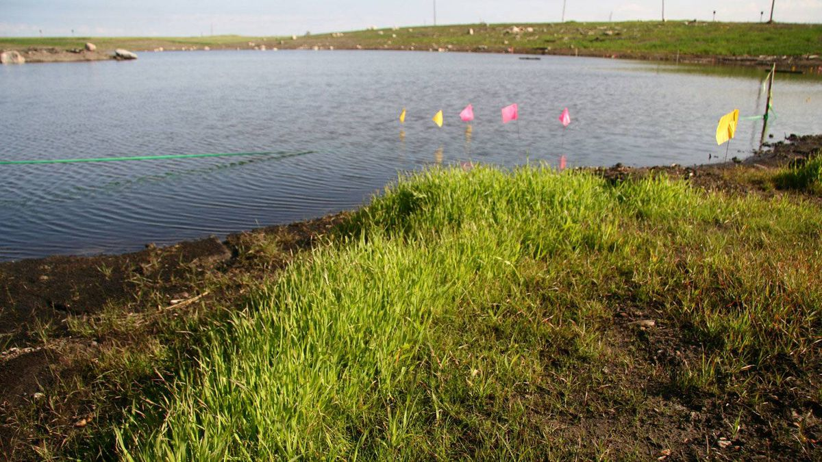 Grasses grow at a new wetlands area on ground that once contained a large toxic effluent pond at Suncor Energy Inc.'s Wapisiw Lookout.