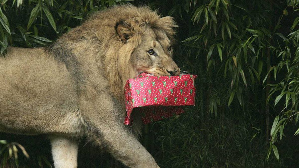You trying telling him that gift was meant for the giraffe.