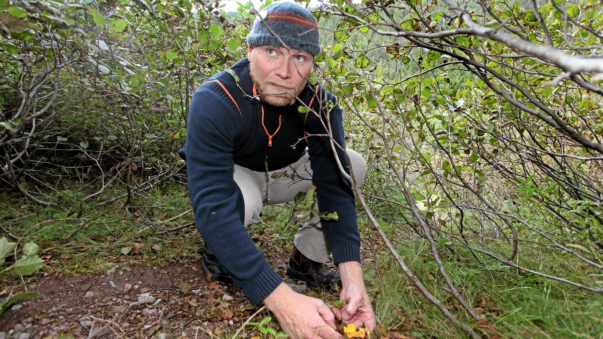 Todd Perrin, a Top Chef Canada contestent, forages for some late season mushrooms in Logy Bay, NL.