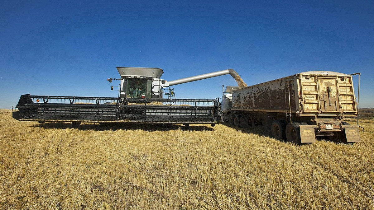 An Alberta famer harvests his crop of wheat, barley, and canola in October, 2010.