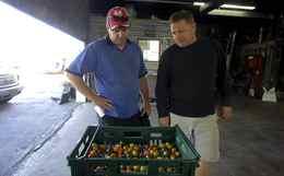 Rob Litwiller looks on as Jason Verkaik (R) shows him fresh mini tomatoes at Verkaik's farm, Carron Farms, in Bradford, Ontario.