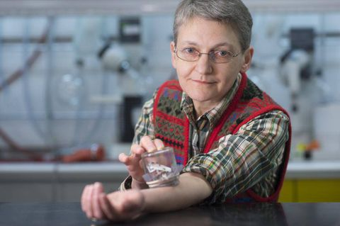 Bedbugs put to rest after discovery by SFU scientists