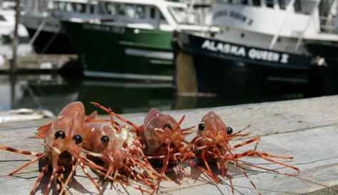 Spot prawns at Fisherman's Wharf in Vancouver.