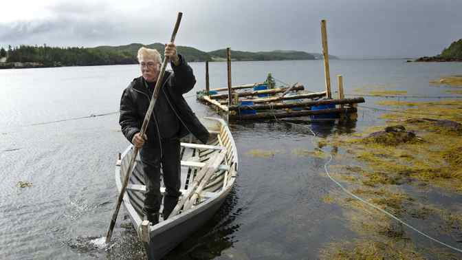 John Keefe plies the waters near his home in Newville, Nfld., on Sept. 10.